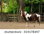 horse walking on the ground | Shutterstock . vector #314178347