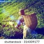 farmer picking tea leaf... | Shutterstock . vector #314309177