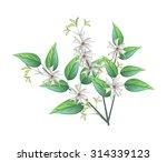 beautiful flower  bunch of...   Shutterstock .eps vector #314339123