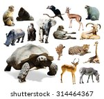 Tortoise And Other African...