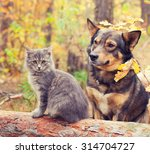 Dog And Cat Outdoors In Autumn...