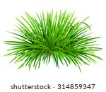 Bunch Of Green Grass. Vector ...