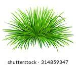 Bunch Of Green Grass. Vector ...