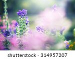 Colorful Lilac Beautiful...