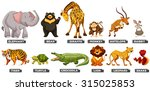 wild animals in many types... | Shutterstock .eps vector #315025853
