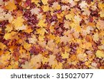 Colorful Autumn Leaves. Natura...