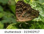 butterfly wings on leaf soft... | Shutterstock . vector #315402917