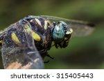 Beautiful Macro Dragonfly...