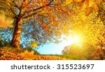 Golden Autumn Scenery With A...