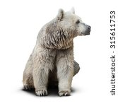 Small photo of Syrian Bear isolated on white