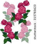 pink roses with green leaves... | Shutterstock .eps vector #315783623