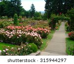 Stock photo rose garden 315944297