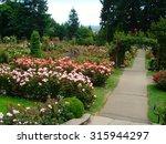 Stock photo rose garden 315944297