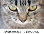 Closeup Of Hypnotic Cat Eyes