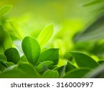 green nature with copy space... | Shutterstock . vector #316000997