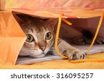 Stock photo the cat plays in the package 316095257