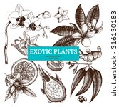 vector collection of with ink... | Shutterstock .eps vector #316130183