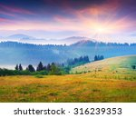 colorful summer sunrise in the... | Shutterstock . vector #316239353