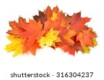 autumn leaves isolated on white ... | Shutterstock . vector #316304237