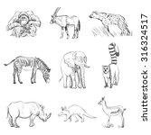 character design set of animals ... | Shutterstock . vector #316324517