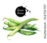 green beans. hand drawn... | Shutterstock . vector #316731707