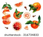 Citrus Fruit_4. Watercolor...