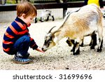 child feeds goat at zoo | Shutterstock . vector #31699696