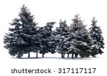 trees spruce isolated on white... | Shutterstock . vector #317117117