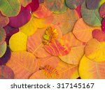 colorful autumn leaves | Shutterstock . vector #317145167