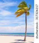 palm trees on a beautiful sunny ... | Shutterstock . vector #317326217