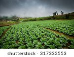 Vegetable Garden In Thailand A...