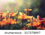 Stock photo orange flowers in garden flowerbed vintage nature outdoor autumn photo 317378897