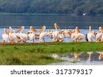 vacationers white pelicans in... | Shutterstock . vector #317379317