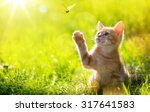 Stock photo art young cat kitten hunting a butterfly with back lit 317641583