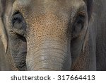 Asian Elephant Closeup Face...