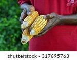Corn  Farmer  Abuja  Nigeria ...