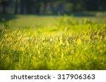 grass | Shutterstock . vector #317906363