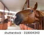 Portrait Of A Curious Horse In...