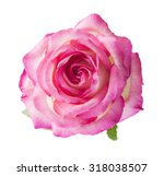 beautiful pink rose   isolated... | Shutterstock . vector #318038507