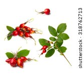 Set Of Isolated Rosehip Branch...