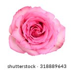a beautiful pink rose against a ... | Shutterstock . vector #318889643