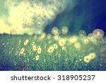 chamomile background nature | Shutterstock . vector #318905237