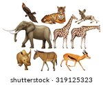 various kind of wild animals...