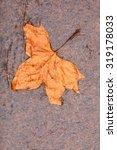 Fall Autumn Symbol. Single...