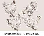 chicken cock vector  hand draw... | Shutterstock .eps vector #319195103
