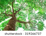 under the tree branch with... | Shutterstock . vector #319266737
