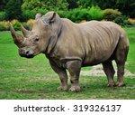 Muddy Rhinoceros Male  Standin...