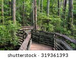 A Boardwalk Bald Cypress Path - Fine Art prints