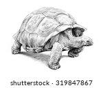 Giant Tortoise  Hand Drawn...