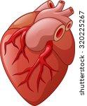 human heart cartoon illustration